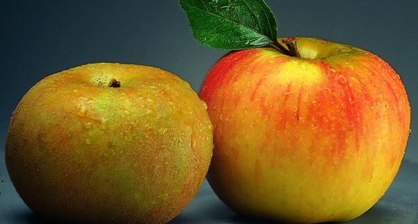 jus-pommes