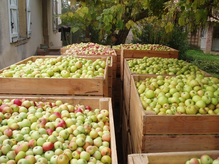 variétés de pommes pour pur jus de fruits du Domaine Laffitte à Mirabel
